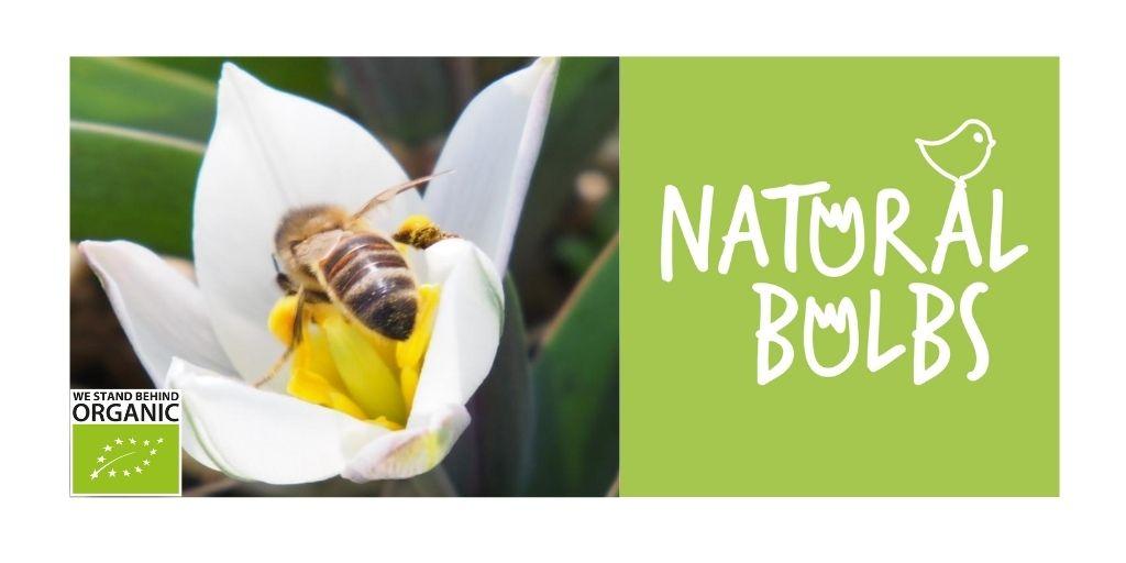 Natural Bulbs